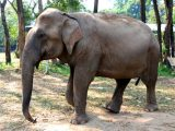 Zookeepers Administer CBD Oil to Help Elephants Cope With Stress